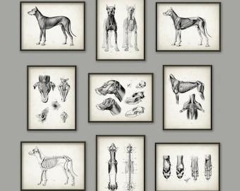 Dog Anatomy Posters Set of 9 - Dog Illustration Prints - Veterinary Practice Dog Anatomy Charts - Dog Skeletal Anatomy - Vet Gift Idea