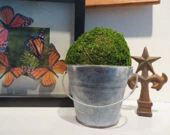 Moss Ball Topiary in a Tin Bucket