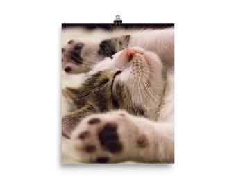 Kitten print