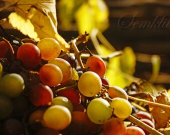 Digital Download photography Grapes