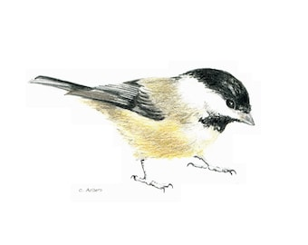 Original Colored Chickadee Sketch - 8384