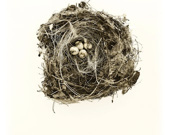 "Farm Nest, 16""x21"" Photograph printed on archival paper with hand deckled edge"