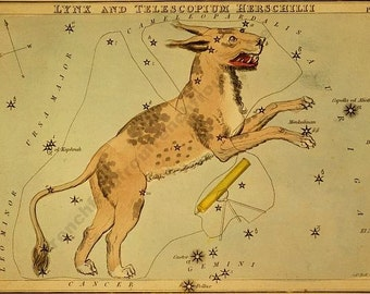 antique astronomy lithograph the lynx constellation