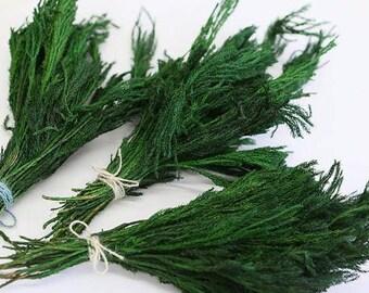 Green moss grass - lycopodium - dried flowers - preserved botanical