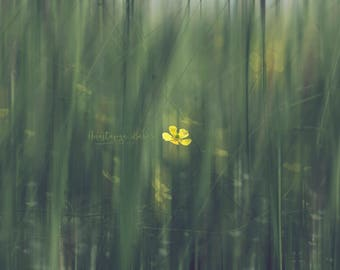 Photography Print of a Yellow Buttercup Standing out in a Field