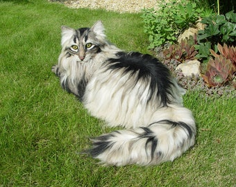 SAMPLE !!! for customised longhaired Cat / Life-Size/ OOAK/ Artist Cat/ Needle Felted/
