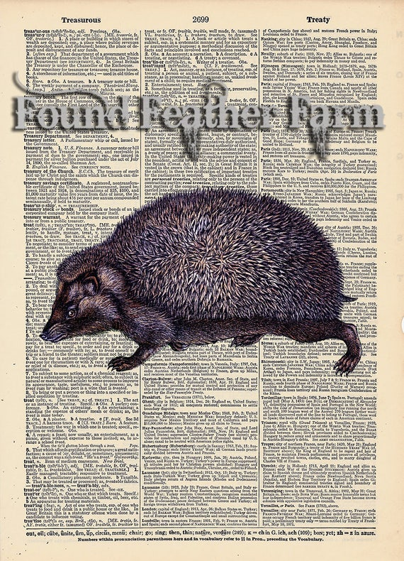 """Vintage Antique Dictionary Page with Antique Print """"English Hedgehog"""""""