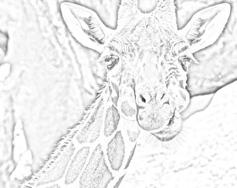 Animals Set 2
