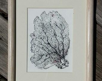 Small original coral drawing
