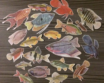 Set of 20 Fish Cut Outs Illustrations from Vintage Book Animals