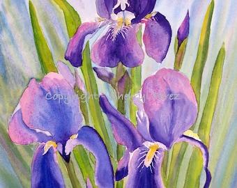 Purple Iris Watercolor Print, iris painting, purple flower painting, giclee', gifts under 20, flower painting