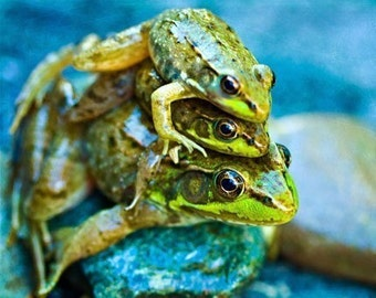 Ready to Ship Frog Photography animal photo Dad Summer wall art home decor under 10 green funny humor for him men dude children blue - ACEO