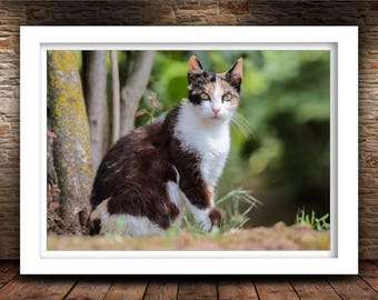Cat Photo Print, Nature Photography, Kitten Art, Home Decor, Fine Art Photography Print
