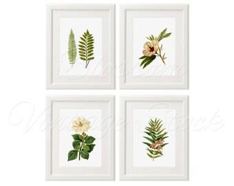 Plants Botanical Print Set INSTANT DOWNLOAD Botany Printable Set, Wall Decor Digital Vintage Illustrations for Print 5x7, 8x10, 11x14 - 2200