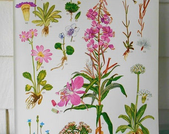 "Botanical, 9X12 illustration page #4 from ""Wild Flowers of the World"" 1970"