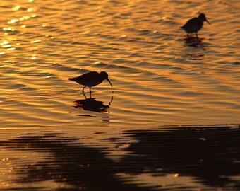 Sanderlings at Sunset - Digital Download - photography - sunrise - sunset