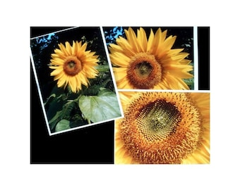 SUNFLOWER Prints * Set of Three * Flower Wall Hanging * Nature Decor