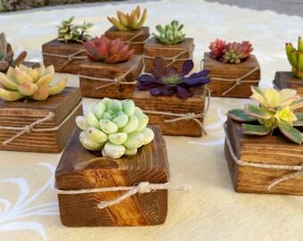 25 Succulent WEDDING Favors, Succulent Bridal Shower favor, Baby shower favor, Special Event Favor, Spring or summer