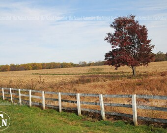 Field, Nature Photography, Autumn, Leaves, Fall, Trees, Peaceful, Farmland, Blue Sky, Maryland