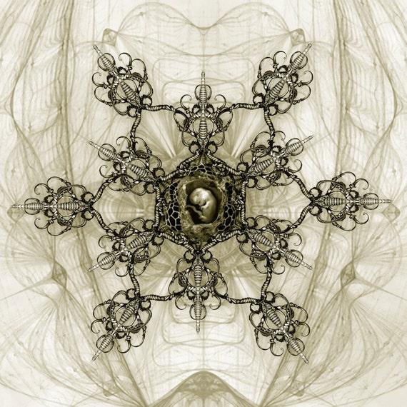 Embryo - Fine Art Print