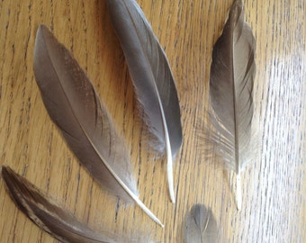 Lot 80- 5 PCS Duck Feathers, Real Natural Feathers, Craft Feathers, Brown Feathers, Australia