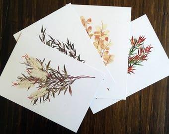 Australian Native Flora - Postcard 4 Pack