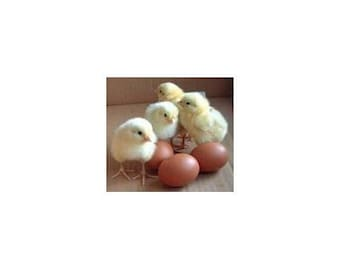 15 Nest Egg Gourd Seeds-1168A