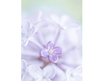 """Purple Lilac: blank floral note card - 5x7"""" framable"""