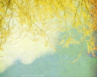 Nature Photography Wall Art Yellow Branches and Blue Sky Nature Photo Shabby Chic Decor 5x5 inch Fine Art Photography Print Willow