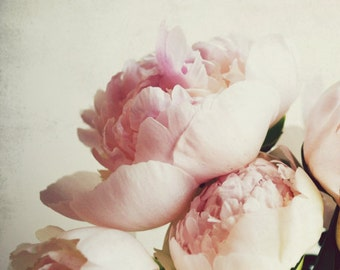 "Peony photography flower photograph pale pink pastel girls room decor romantic floral wall art ""Peony One"""