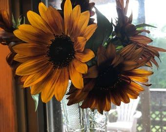 Heirloom Irish Eyes Sunflower Seeds