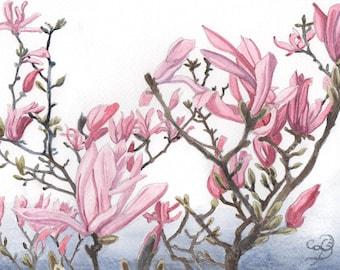 Pink Magnolia, ORIGINAL watercolor painting, FREE shipping