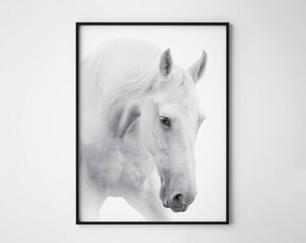 Horse print, White horse print, White horse poster, horse poster