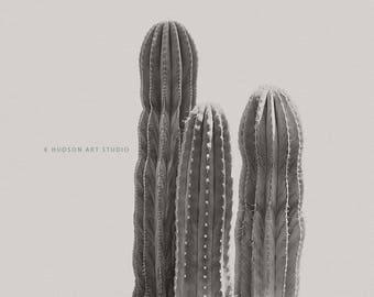 Cactus print Fine Art Photography modern southwest art cactus art 8x10 11x14 16x20 wall art modern san pedro cactus art desert decor