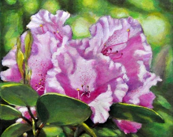 Rhododendron in the Light