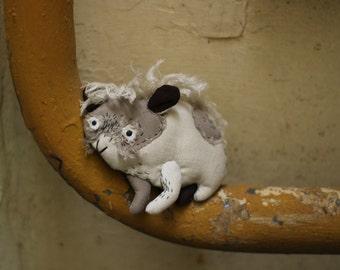 gray guinea pig
