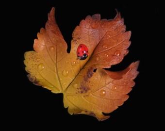 Yellow Sycamore Leaf & Ladybird Brooch
