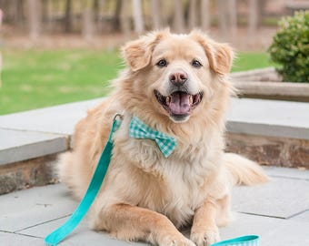 Teal GIngham Layered Dog Bow Tie - Optional Collar and Leash - Dog in Wedding
