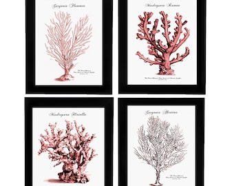 CORAL PRINTS, RED Coral, Coral Art, Coral Pictures, Beach Decor, Beach Prints, Red Set A of 4 Prints