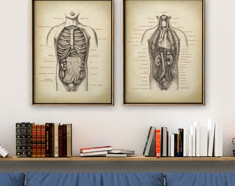 Anatomy Poster SET of 2, Anatomical Print, Human Body Chart, Anatomy Chart, Medical Print, Anatomy Chart, Antique Anatomy