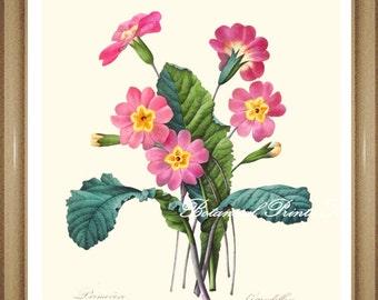 "Botanical Print. Primula. Pink Flower Print. Floral Wall Art.  5x7"", 8x10"", 11x14"""