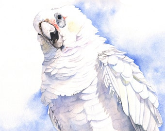 Corella print of watercolour painting 5 by 7 smallest print -C4515 wall art print - bird art print
