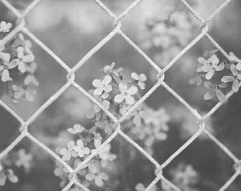 phlox through the fence -b & w-flower photography-black and white photography - Original fine art photography prints - FREE Shipping