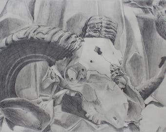 Ram Skull Pencil Drawing Giclee Print