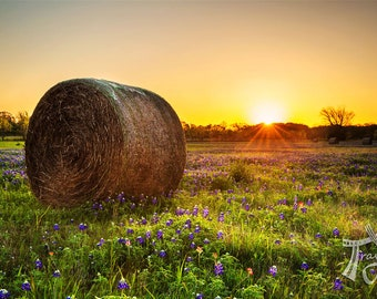 "Texas Photo Print | ""Hay Bale View"" | Texas Bluebonnets Wall Art | Rural Texas Print - Hay Bales Decor - Rural Photography - Rustic Wall Art"