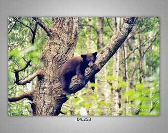 04.253 Black bear cub Limited Edition, Signed and Numbered 8x12 Image
