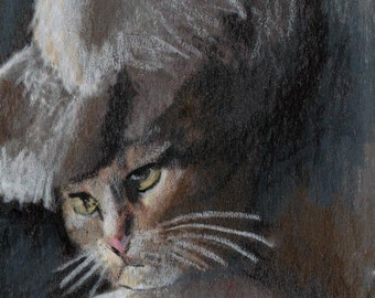 original art drawing aceo card victorian cat portrait anthropomorphic animal in clothes
