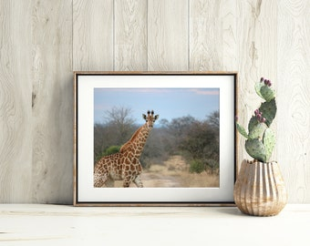 Wildlife Photography, Giraffe Print, Wildlife Print, Baby Giraffe, Nature Photography, African Wall Art, Giraffe Photography, Nursery Decor