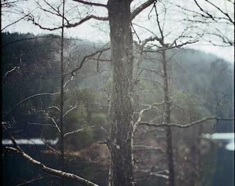 Norway, Autumn, Photography Art Print, Norwegian Nature, Analog, Landscape, Forest, Scandinavian, Home, Cabin, Office Decor, Lake, Tree