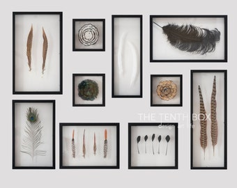 Framed feather collection display Feather specimen Feather Art natural copper pheasant feather FE00